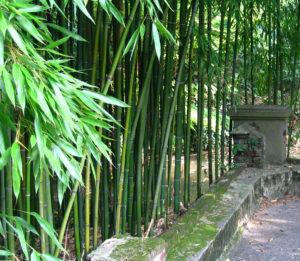Amenager Un Jardin Zen Realisation D Un Jardin Zen Pour